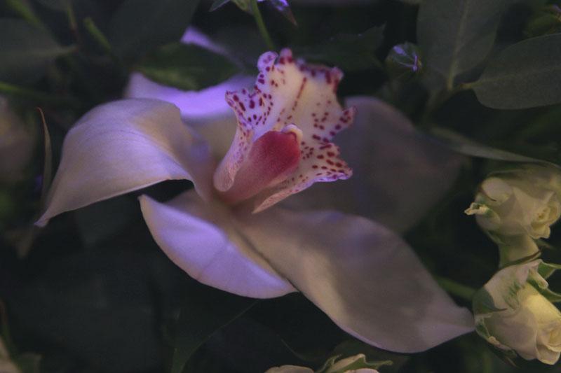 Презентация Guerlain - уход Orchidee Imperiale - видеорепортаж